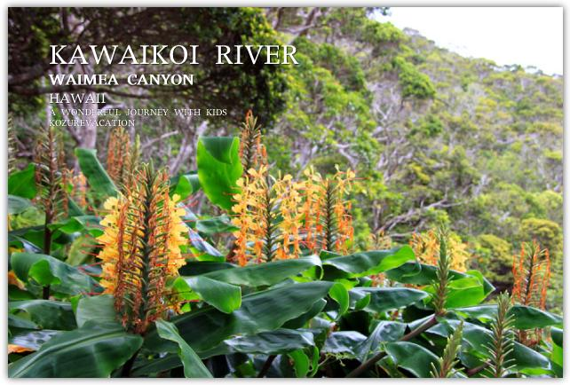 カヒリジンジャーの花