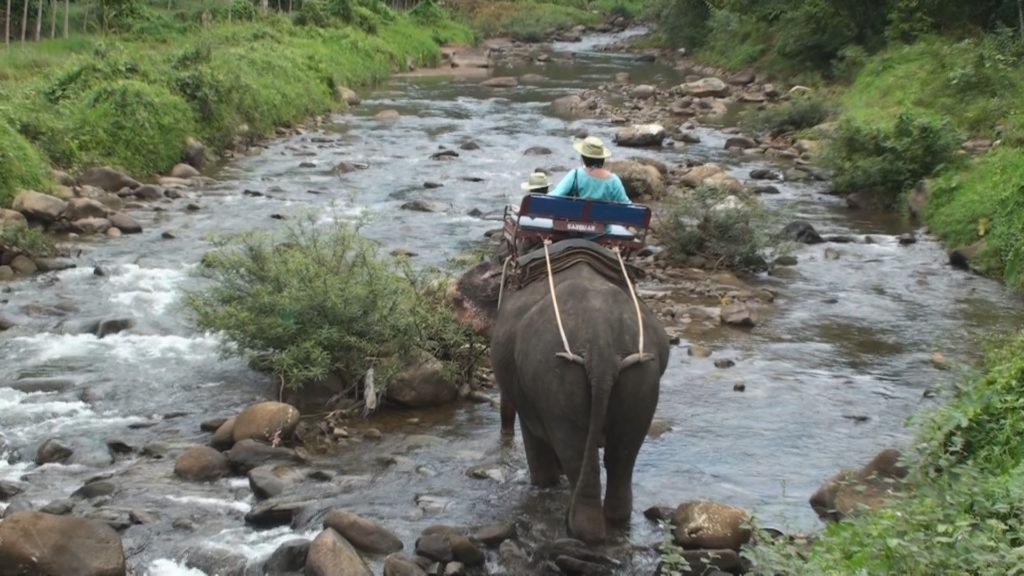 川の中を進む