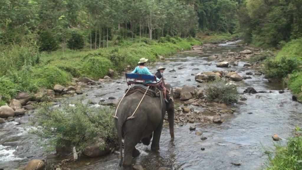 象に乗って川の中を進む