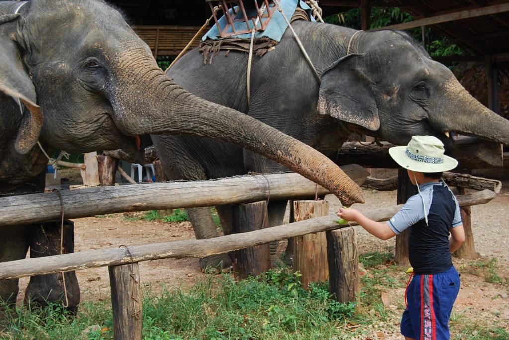 象に餌をあげるリュウ