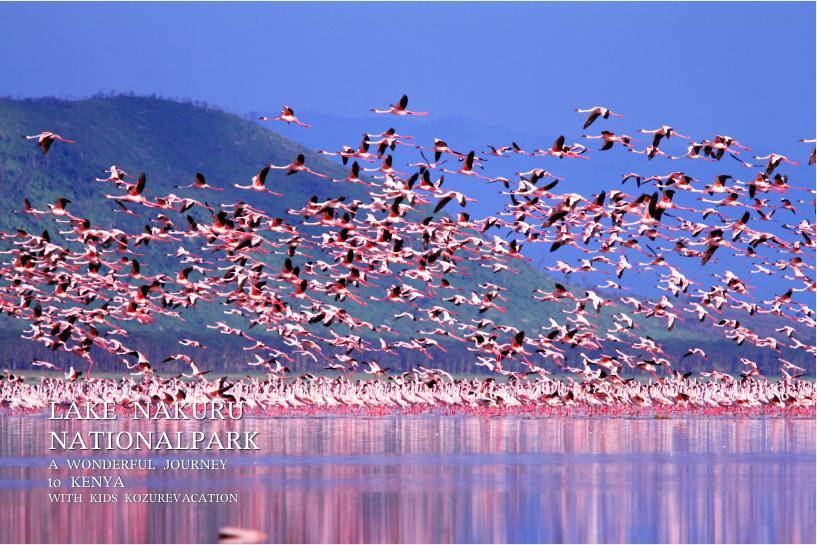 ナクル湖を飛び立つフラミンゴの群れ