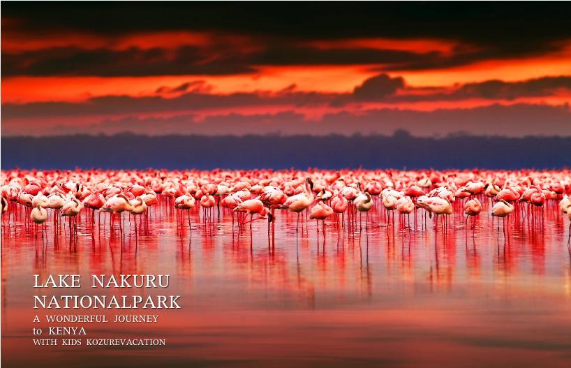 ナクル湖のフラミンゴと夕日