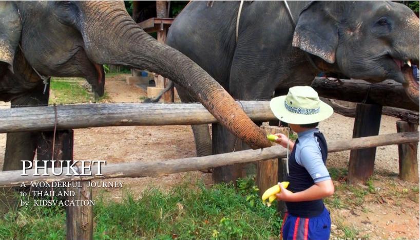 ゾウに餌をあげる子供たち
