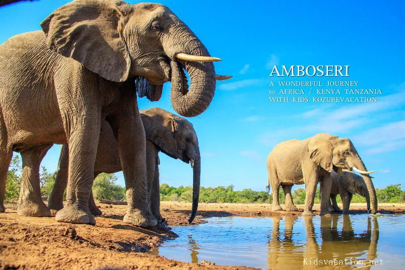 ケニア・アンボセリ国立公園のアフリカ象