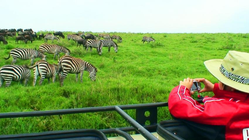 ンゴロンゴロでシマウマやヌーの群れを見る長男