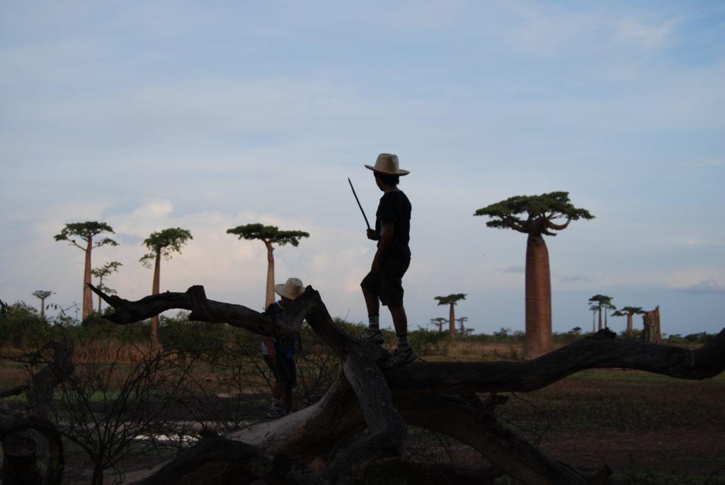 バオバブ並木で遊ぶ子ども達