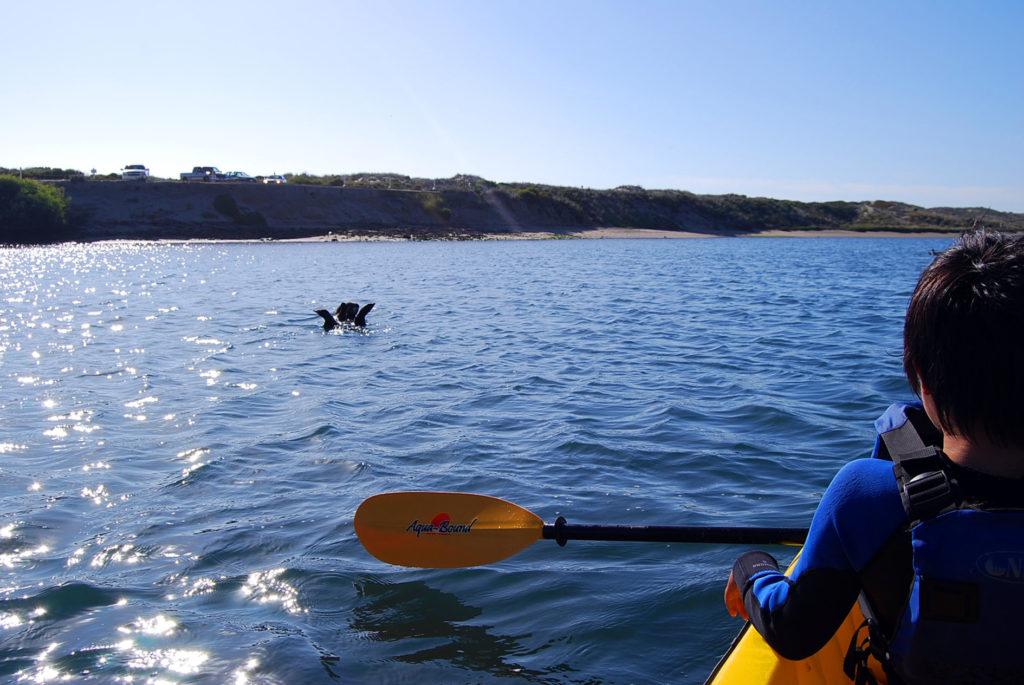 子供と2人乗りのカヤックを漕いでラッコと遭遇した
