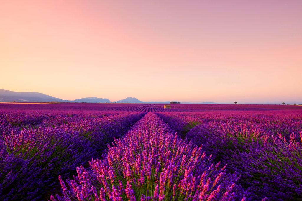 夕日に染まるヴァランソル高原のラベンダー畑