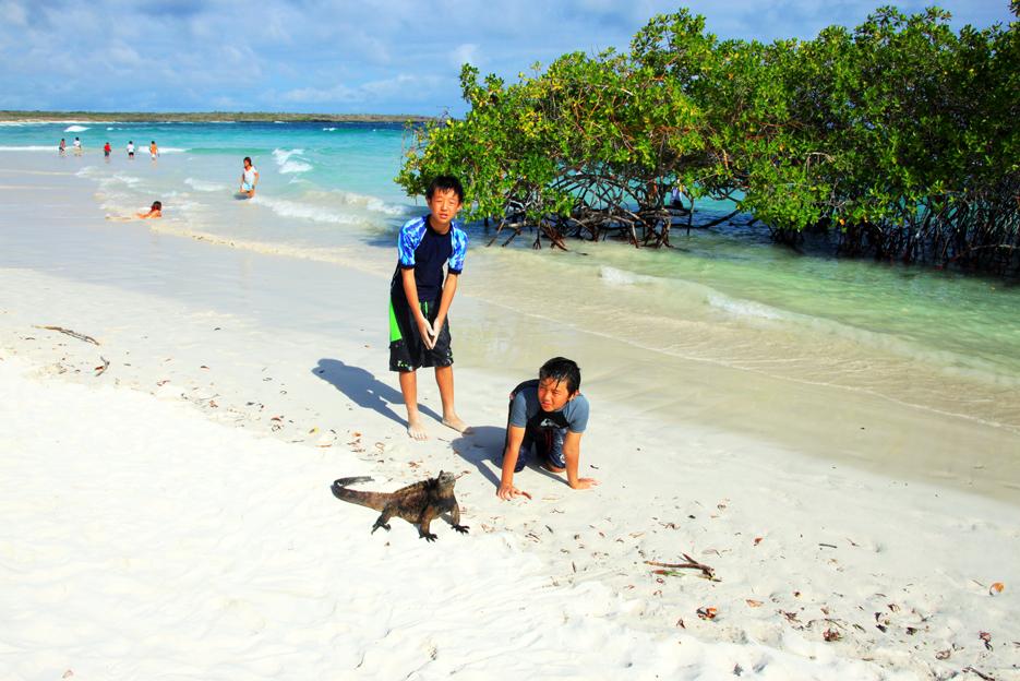 ガラパゴス諸島サンタクルス島のトルトゥガベイビーチで海イグアナと子供たちの記念写真