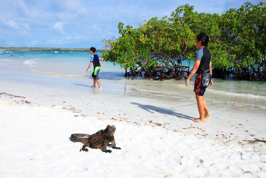 ガラパゴスのビーチ