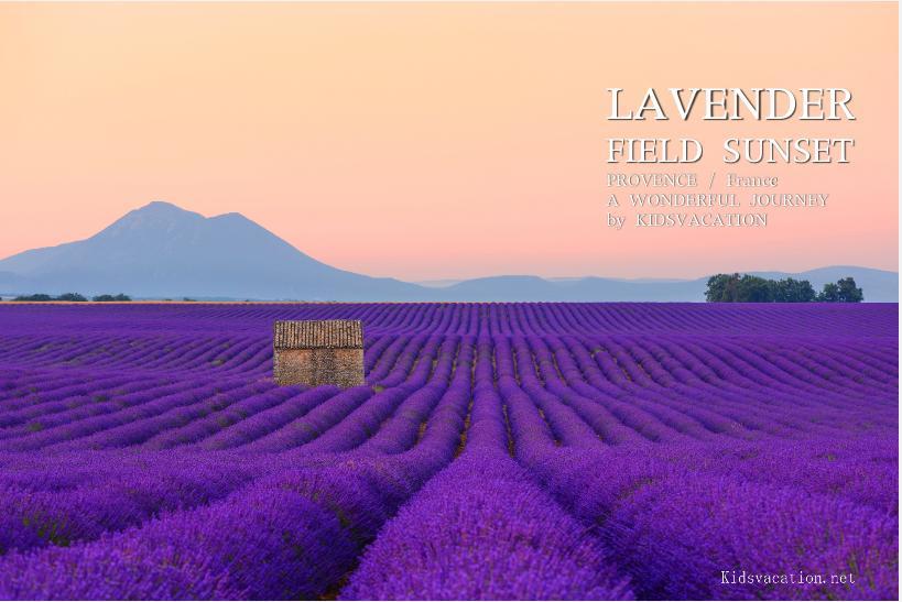 ヴァランソル高原のラベンダー畑の夕景