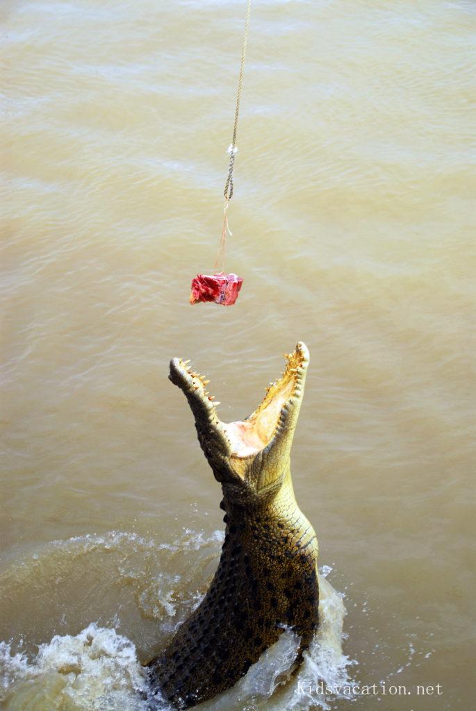アデレイド川のジャンピングクロコダイルクルーズ