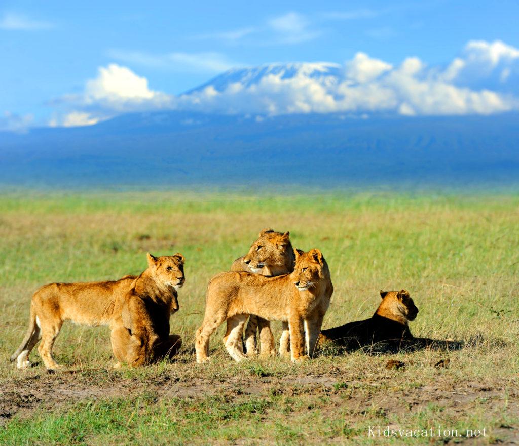 キリマンジャロとライオン
