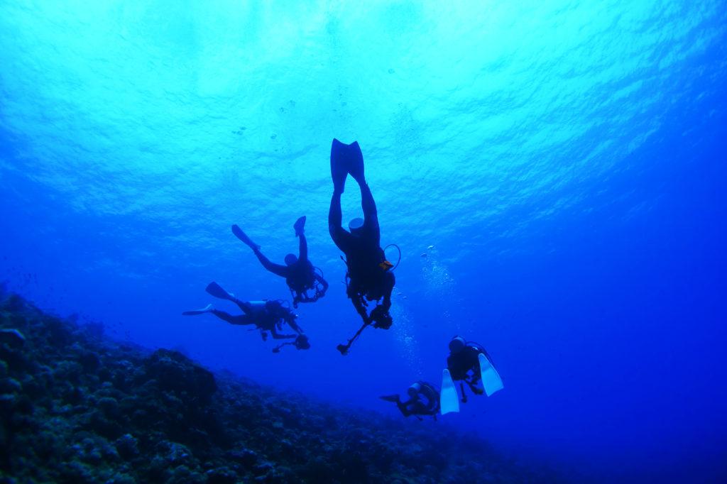 タヒチでのダイビングの海中写真