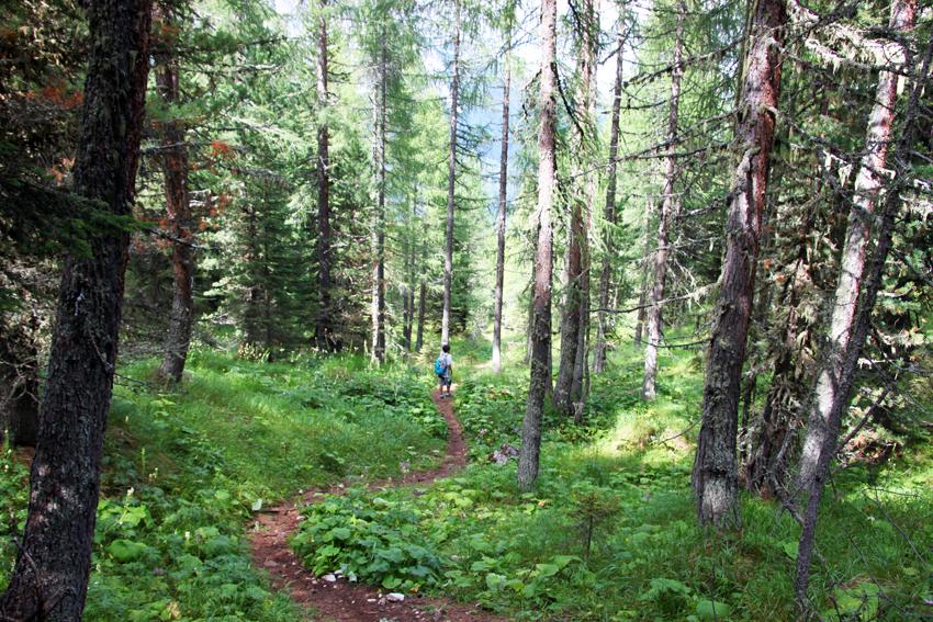 森の中を下る次男