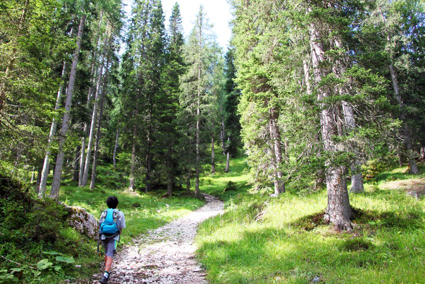静かな森の中の登山道