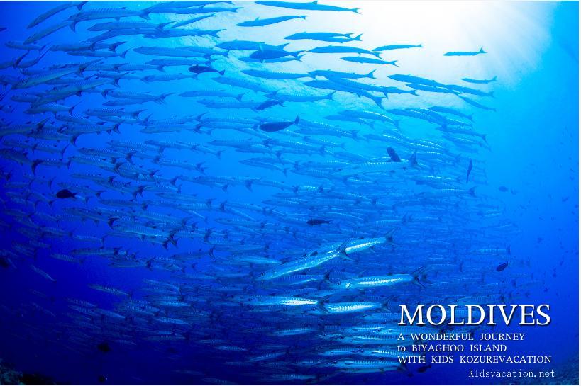 モルジブの海中写真