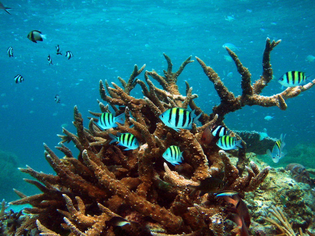 シミラン 諸島のシュノーケリングで撮影した海中写真