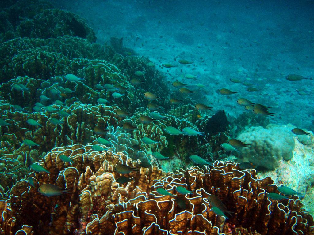 サンゴ礁とトロピカルフィッシュ