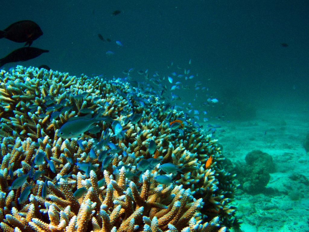 ミアン島の珊瑚礁