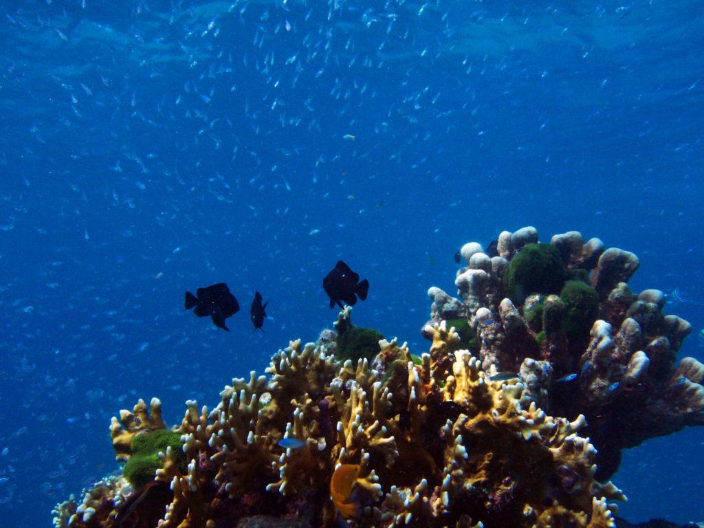 サンゴ礁の周りを泳ぐ魚たち