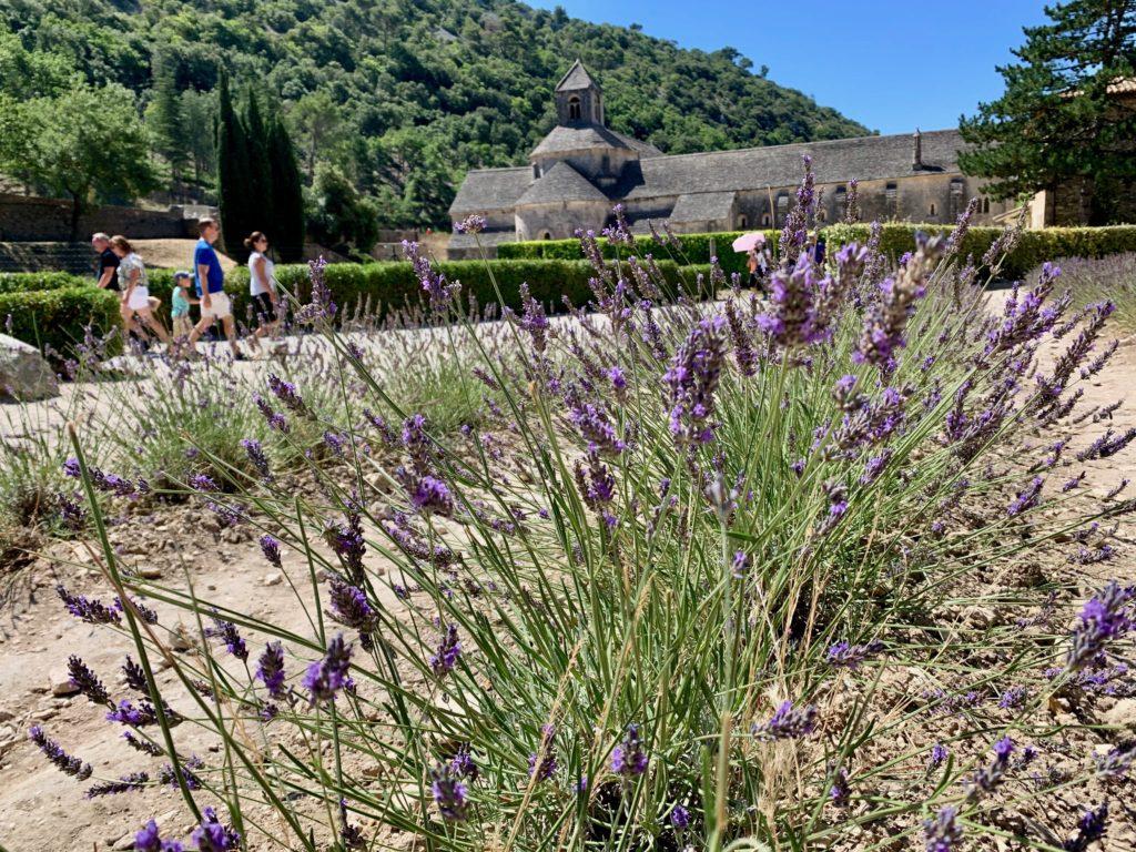 セナンク修道院のラベンダー畑を見学する観光客