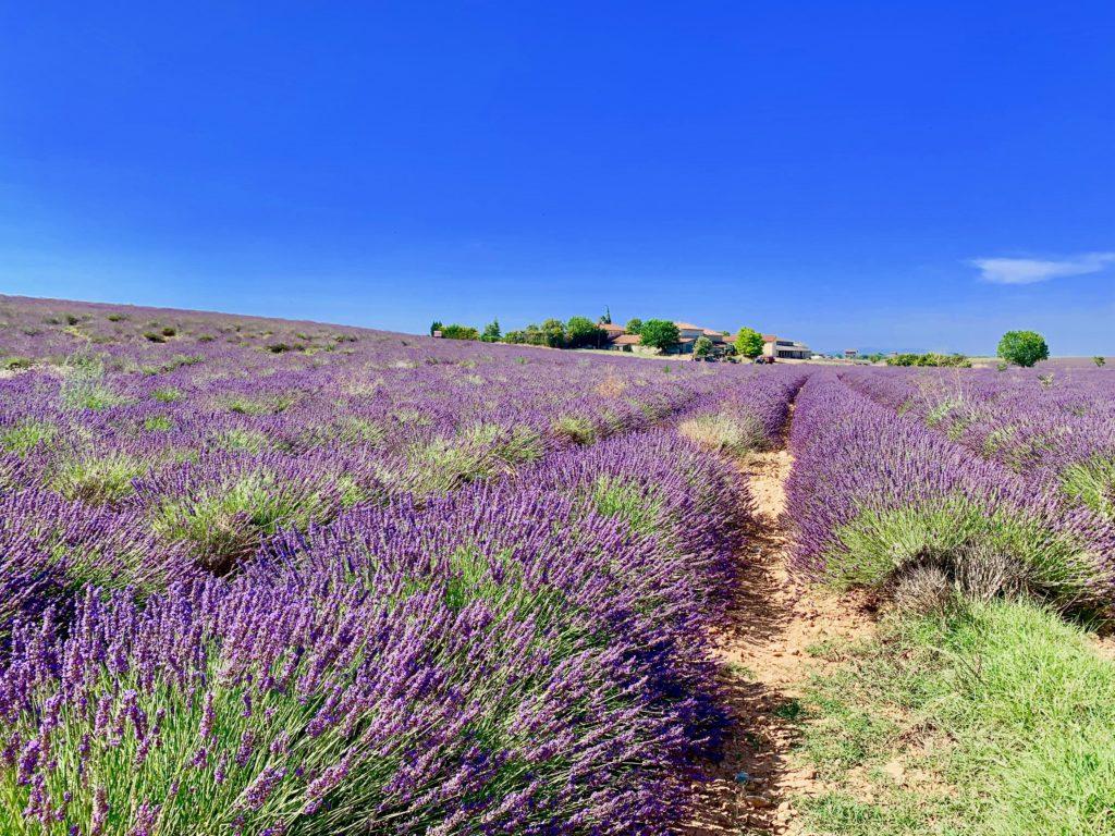 ヴァランソル村のラベンダー畑と青い空