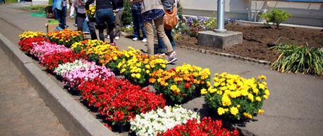 花壇の前に並べられたたくさんの花