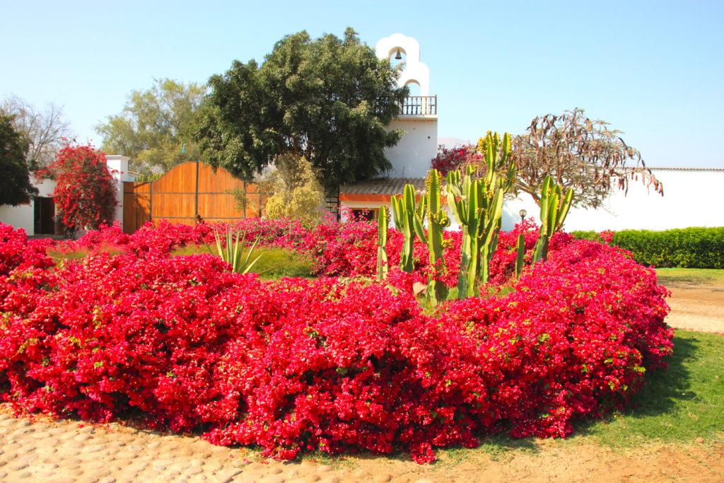 ブーゲンビリヤが咲くホテルの前庭