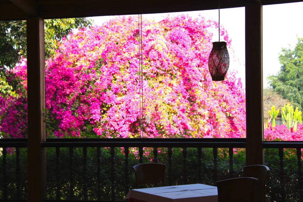カンタヨホテルの朝食レストランから見える庭のブーゲンビリア