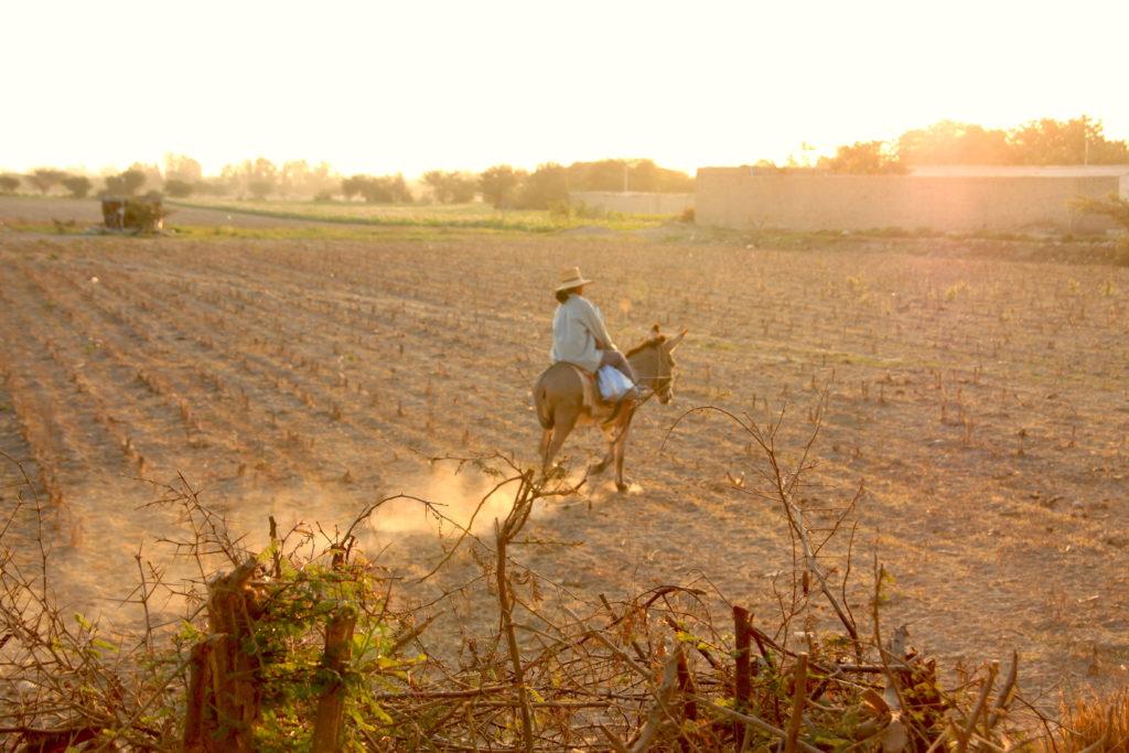 綿花畑で作業する人