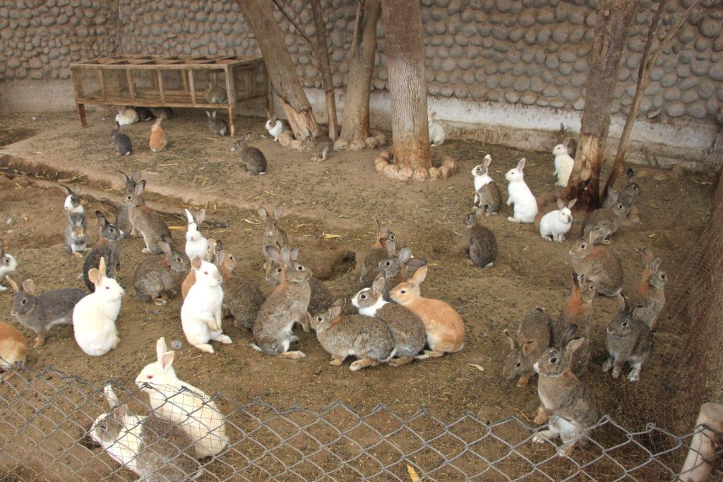 ウサギがたくさん