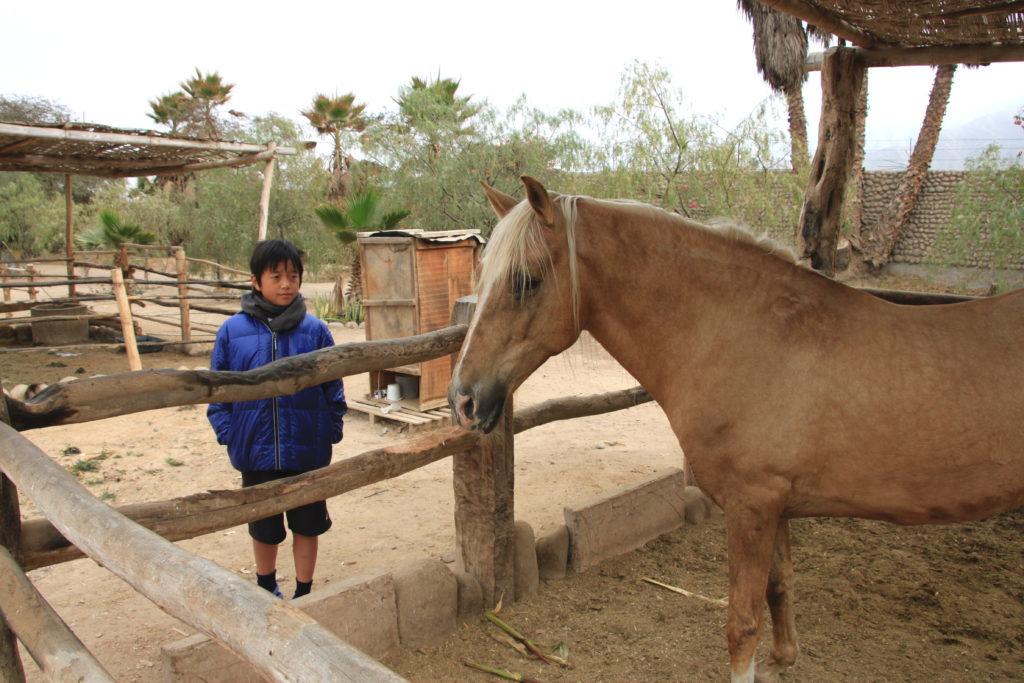 馬を見つめる次男