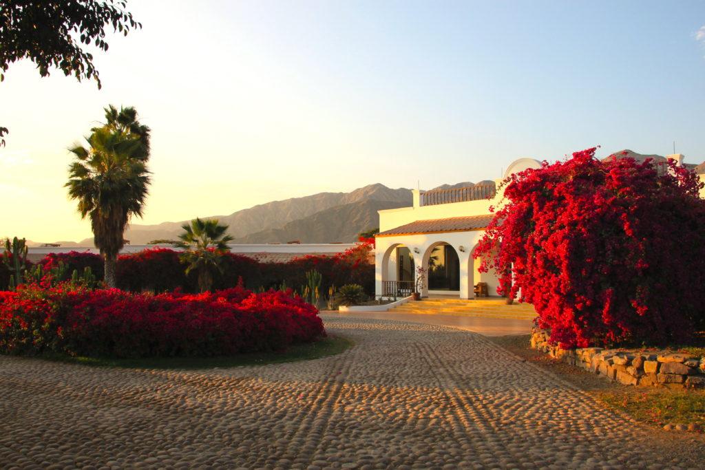 ホテルの中庭に咲くブーゲンビリア