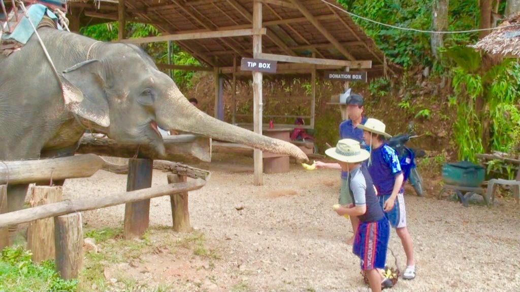 象に餌をあげる子供たち