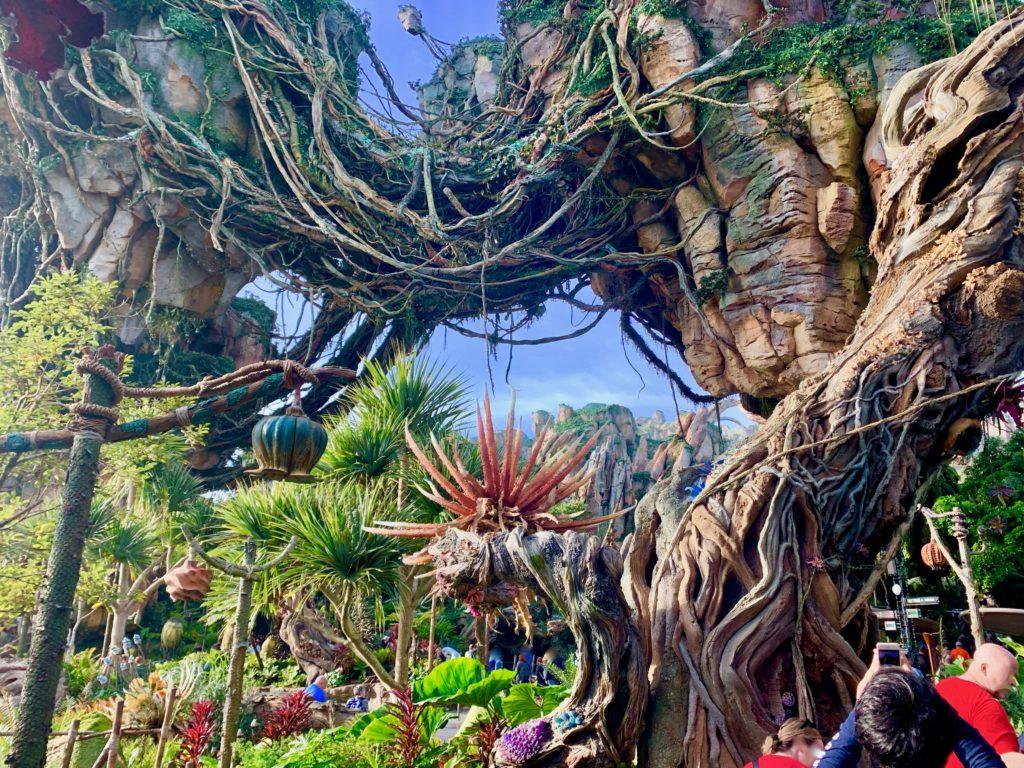 フローティングマウンテンの植物たち