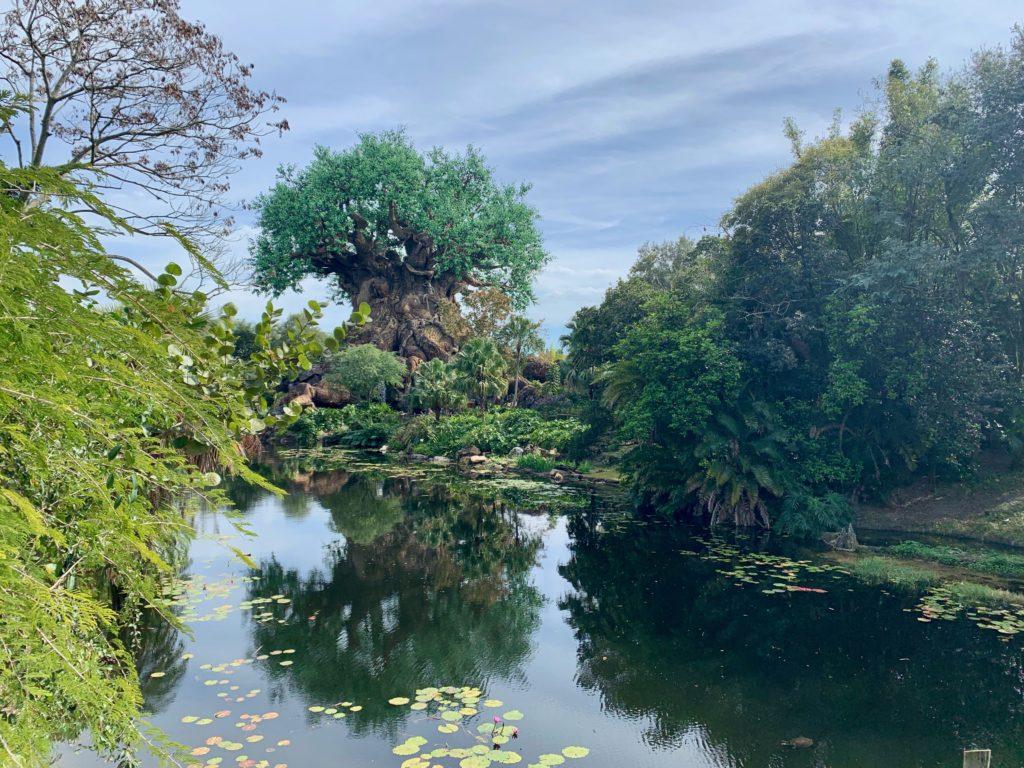 池の向こうに見えるアニマルキングダムのシンボル「ツリーオブライフ」