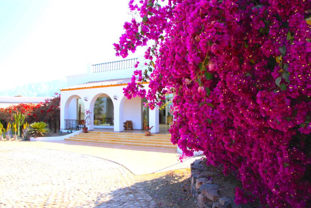 カンタヨリゾート&スパホテルのエントランスに咲くブーゲンビリヤ