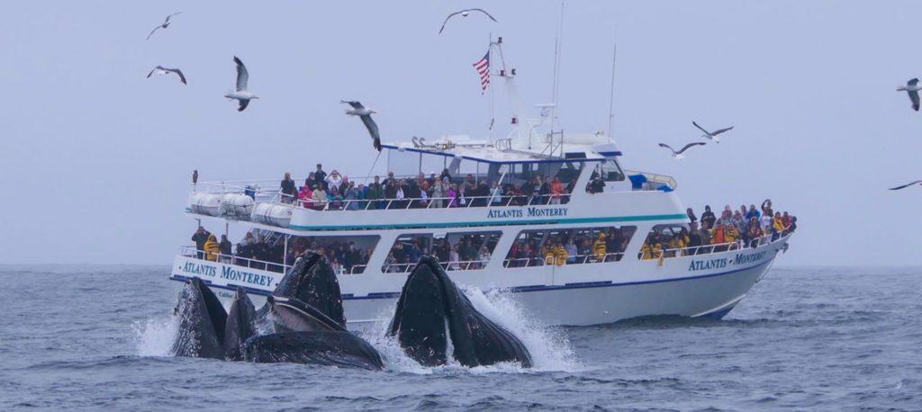 ボートの周りに集まるクジラたち