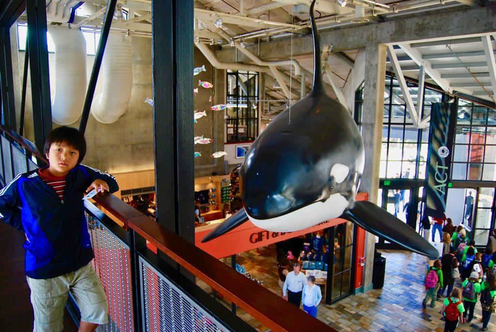 モントレーベイ水族館のエントランスホールを見下ろす次男