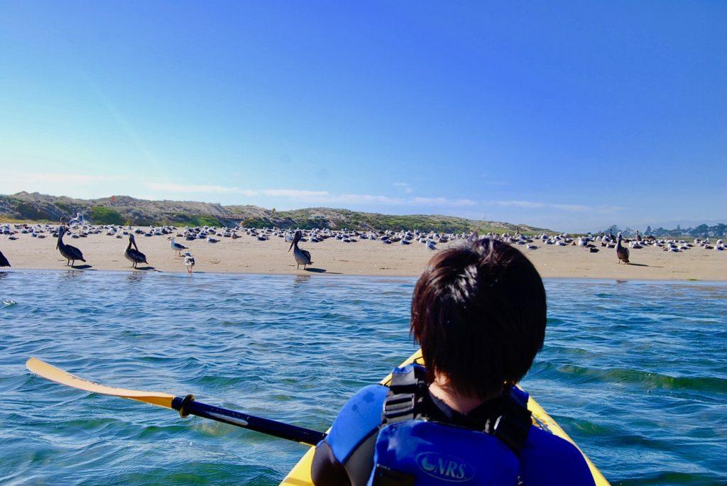 カヤックを漕いでペリカンや野鳥がいるビーチに向かう次男