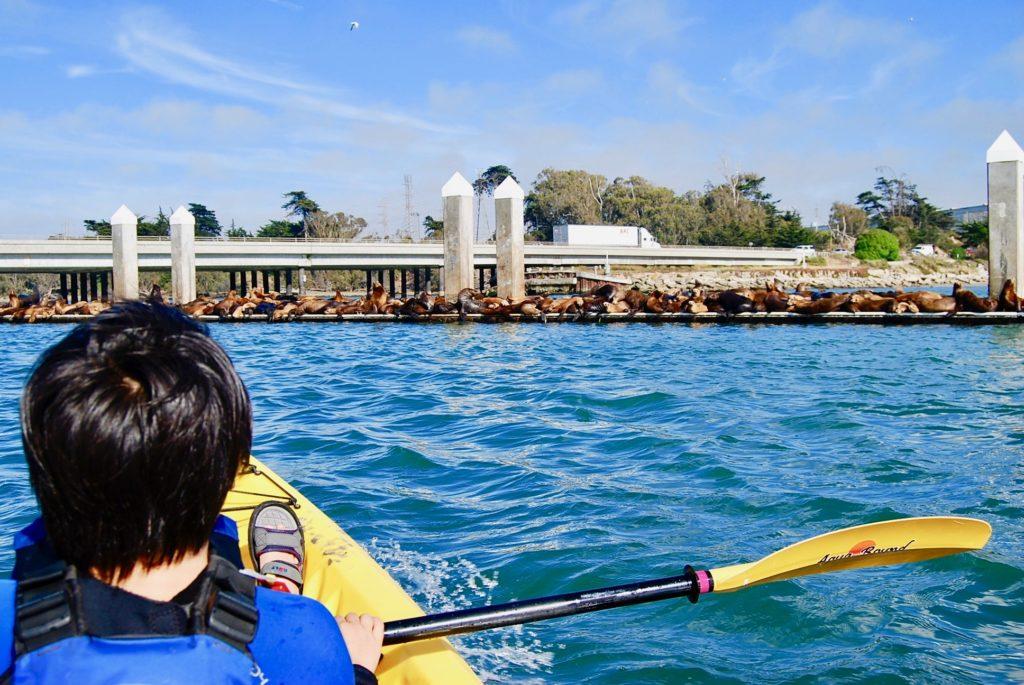防波堤の上で日光浴をするたくさんのアザラシ