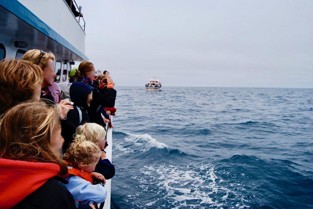 クジラを探す観光客