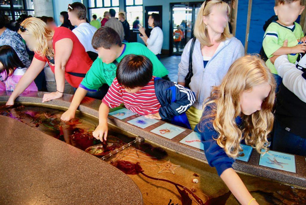 タッチプールで海の生き物に触る子供達