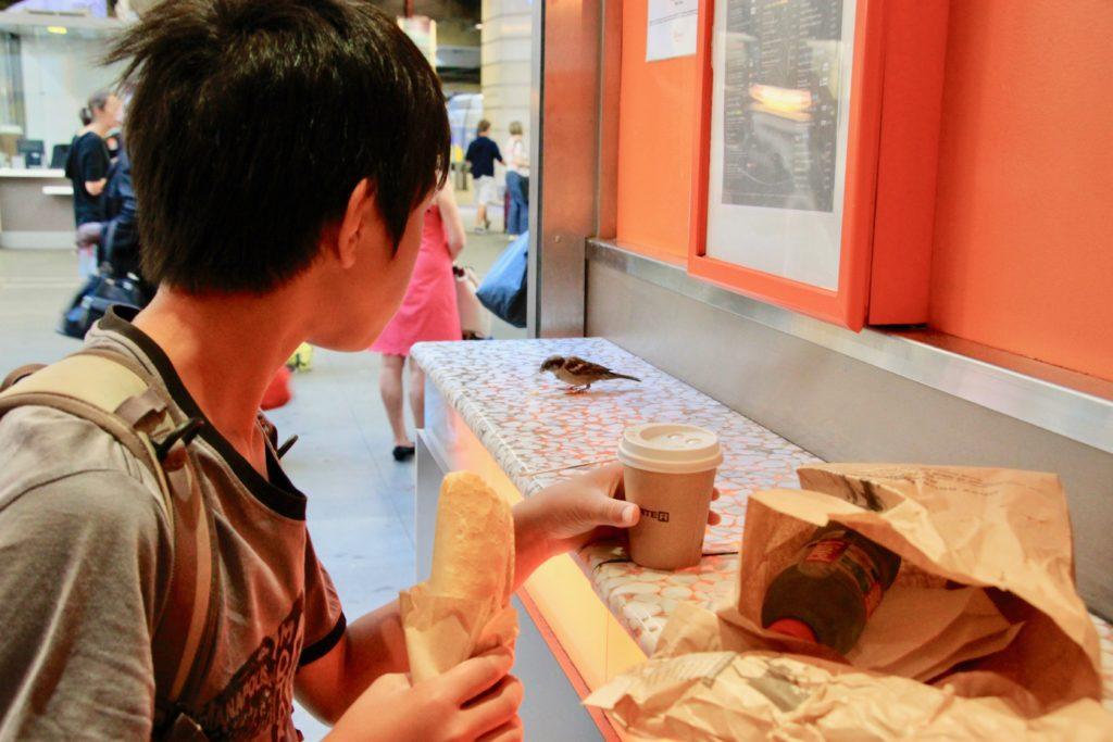 サンドイッチを食べながらカウンターのスズメを見て驚く次男