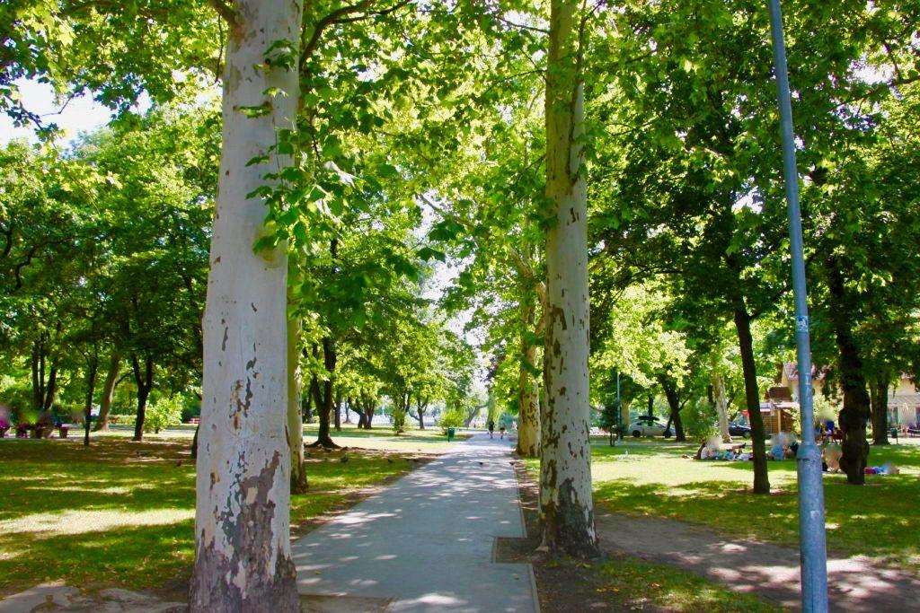市民公園のプラタナスの並木道