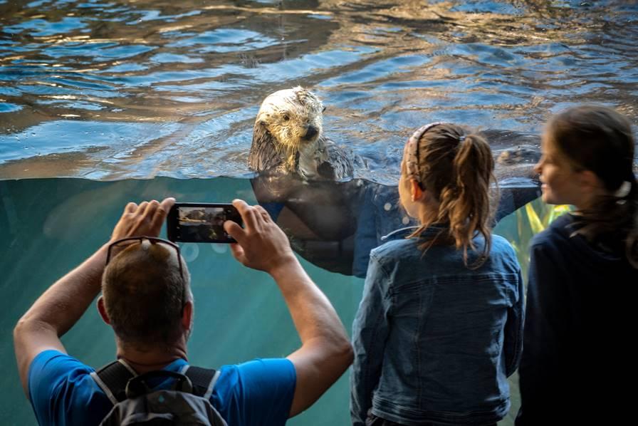 水槽のラッコを写真に撮る父親とそれを見る娘たち