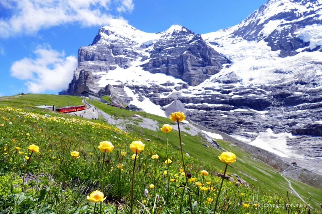 花が咲き遠くに赤い登山電車とアイガーが見えるトレイル