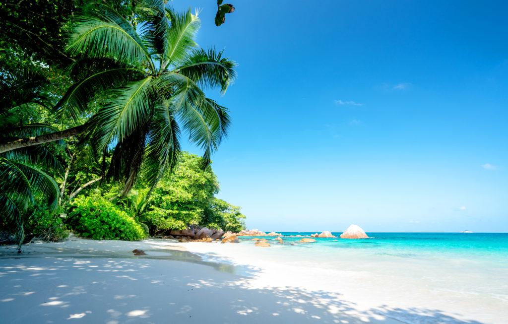 ヤシの木陰とコバルトブルーのビーチ