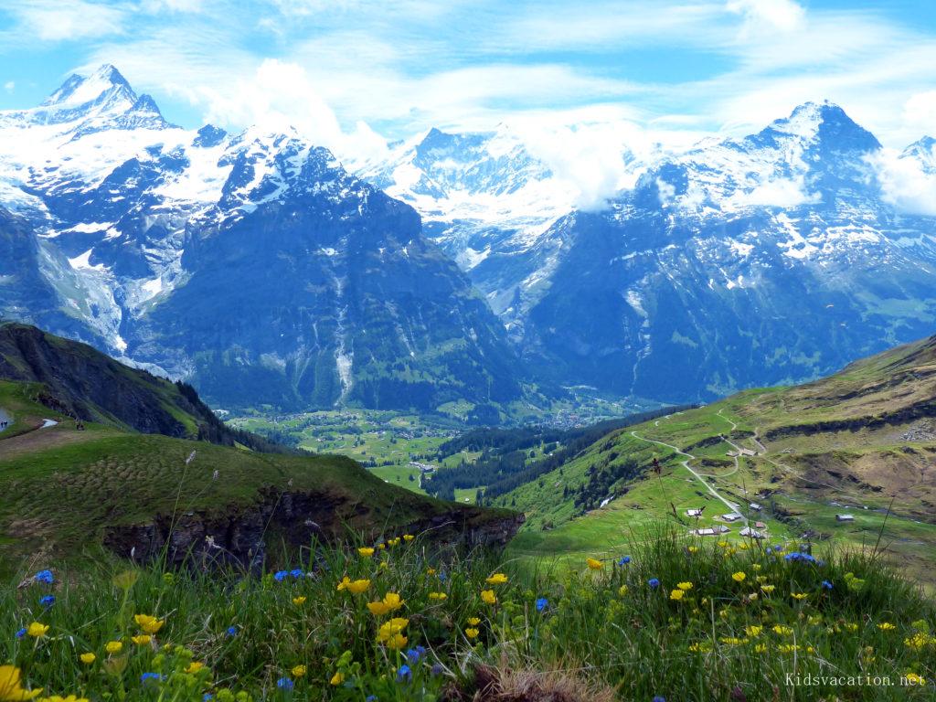 高山植物の花が咲く風景